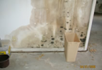 mold damage 2